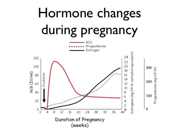 naturligt progesteron i mat