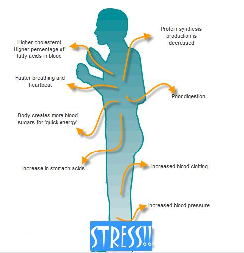 stress vad händer i kroppen